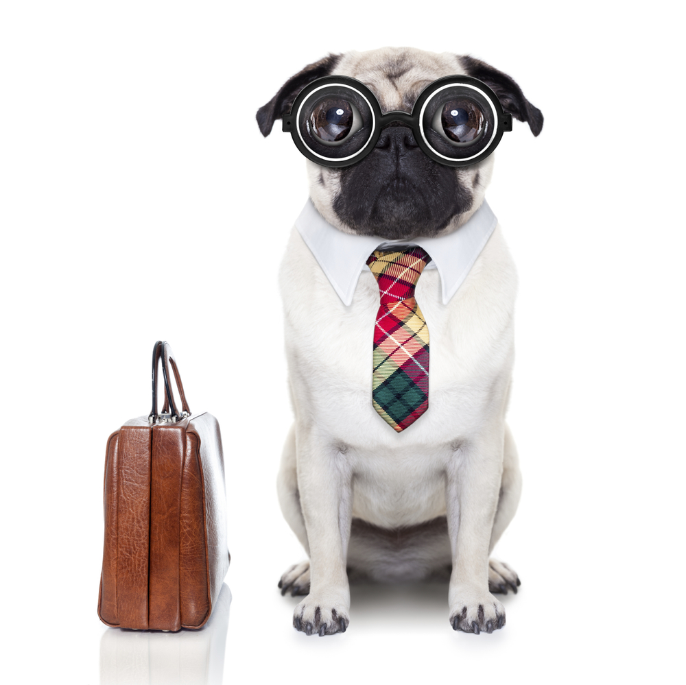 A small pug dog with thick glasses that look like goggles and a tie with a collar. The dog sits next to a brown leather brief case.